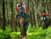krabi-day-tour-elephant5