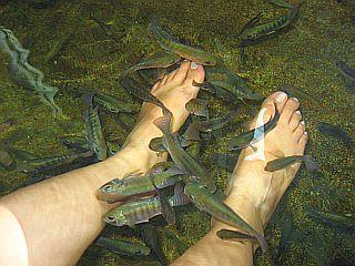 fish_spa2