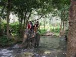 elephant trek3