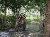 elephant-trek3