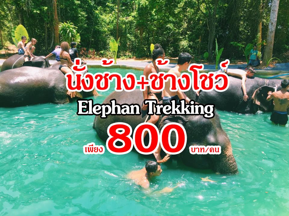 นั่งช้างช้างโชว์2